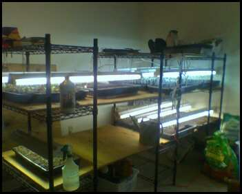 Our back room seed starting set up.