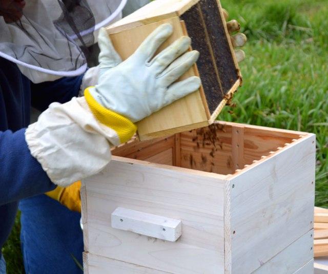 Bees_Dump