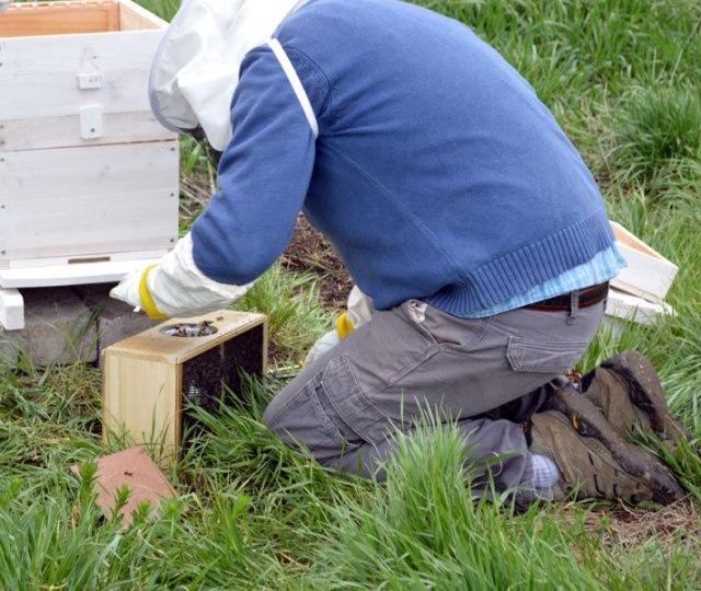 Bees_OpeningBox