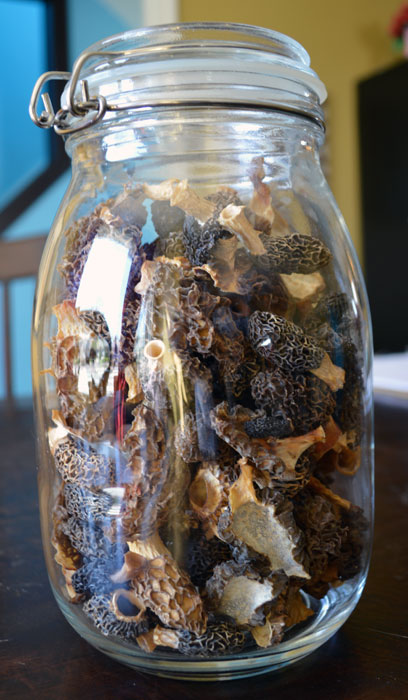Morels_Dried