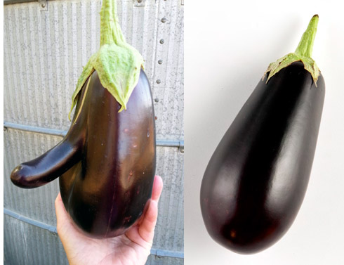 eggplantcompare